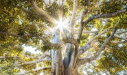 樹木的療癒力﹗增強身體抵抗疾病和壓力妙法﹗