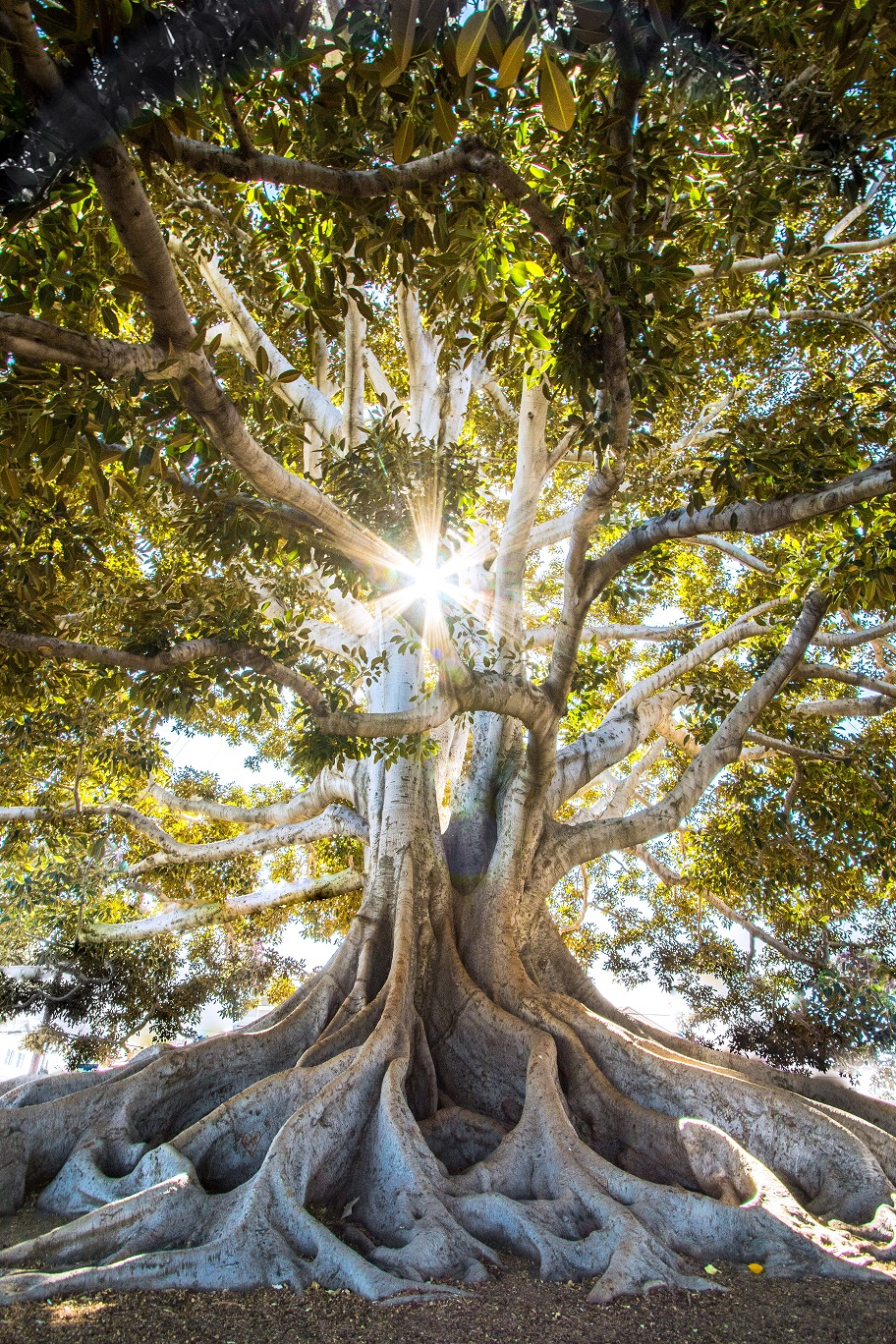 tree healing power, self healing, 個人成長,自我療癒, 樹木